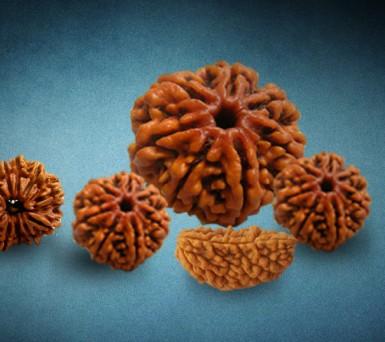 Rudraksha-Seeds